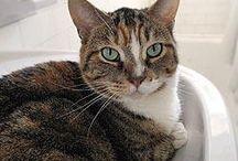 Cats & Kittens for Adoption through Annex Cat Rescue / Annex Cat Rescue's cats who are up for adoption:  http://annexcatrescue.ca/adopt/