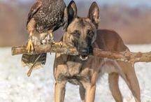 Állatok animales ,kölykök