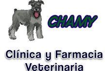 Veterinaria Chamy Alajuela / Aquí nos puede conocer bien