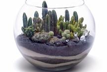 Succulents Terrariums