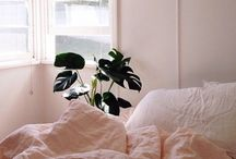 Blush Bedding