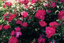 Seasons at Calderwood