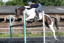 Heartbreaker (Patch) / 16.2hh TB/Warmblood Gelding, Born 2003 Sire/Dam: Orlando/Miss Springfield Owned by Sarah Taylor & Martin Walker He is an athletic and capable horse who likes to be kept busy! He had good xc clears and really enjoyed himself, his concentration improves as he is challenged with higher levels and he progressed to an excellent 3rd place in the Novice at Broadway to close his first season.