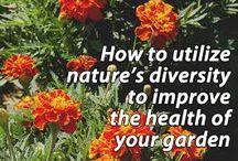 Companion Planting - Organic