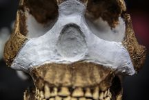 Homo naledi