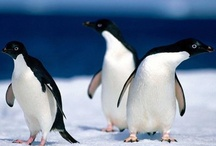 Penguins, Kangaroos & Wallabys  / by Alix Pery