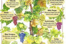 Wine/Вино/Vino