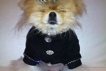 Giggy The Pom / Official Board for #GiggyThePom of the #RHOBH (A.K.A. the #SexMonster).