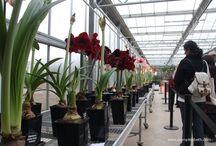 Indoor Plants / Beautiful house plants to grow inside.