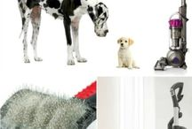 Dog training tools and supplies / Canines In Balance uses a variety of tools to train dogs.