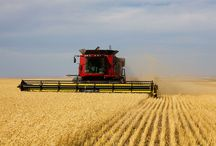 Combine Harvesters / Combine harvesters have revolutionized crop farming and there is nothing better than seeing a field full of harvesters working.