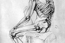 Anatomy - Skeleton / Bones of the body