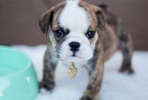 too cute / by Cheryl Carroll