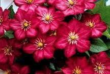 Sm dark pink flowers
