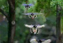 Kråkefugler
