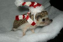 Adorable Mini Pets I Want