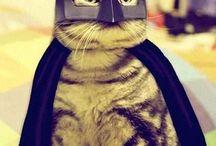 GATOS / i love cats, not you