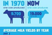 stuff about milk