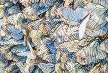 million butterflys---moths