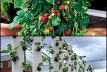 Garden/glass house ideas