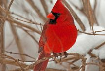 Birds / Fascinating pictures of birds and things depicting all kinds of birds / by Lynn Williams