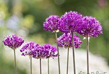 Frühlingsblumen / Zauberhafte Frühblüher auf Leinwand, Kunstdruck oder Fototapete im Wunschfomat