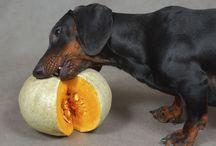 Lagotto Pedro / Very sweet dog