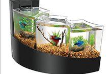 acquari-pesci