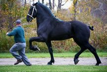 Dream horses / by Janet Samson-labanowitz
