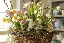 Flora & fauna Spring