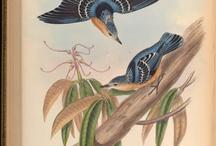 Antique Biological illustrations