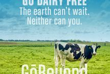 Go Dairy-Free