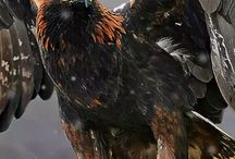 Birds of prey / Our beautiful feathered friends