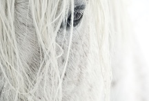 HorseBeauty / by Julie.