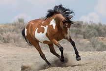 Equine / Everything equine!!!!!! / by Mikayla Nunn