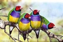 Tiere: Bunte Vögel