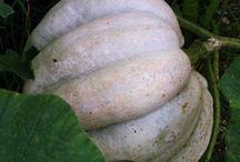 Sebze Yetiştiriciliği