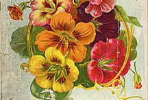 seed packets / by Goldilocks Designs LLC