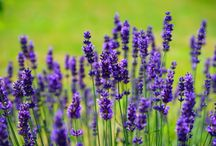 Garden: Mój piękny ogród