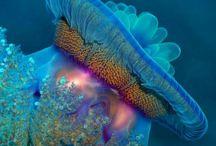 Under Water Animals / by Laura Herbine