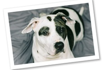 Meet the Breeds: Dogs