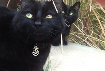 My cats / My boys: R1 and R6 / by Brandy Weaver