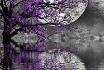 Moon ✨