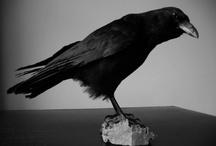 vogels..opgezet