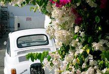 Fiat 500 <3