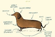 Doxies all day