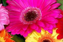 FLOWERS ..