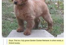 Future doggo