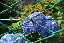 Dimore d'Arte, Landscape surrounding www.dimoredarte.com / Tourism Lago d'Orta