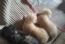 Kittens / My Kittens